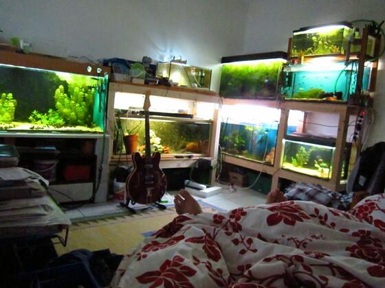 Blick vom Bett aus auf meine Aquarien