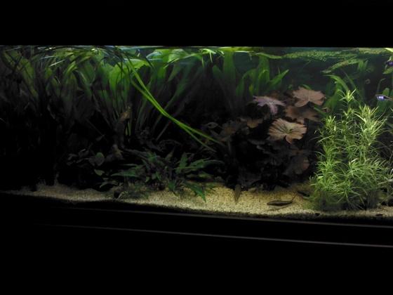 Wasserpflanzen im großen Becken