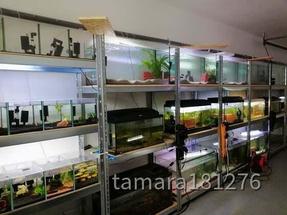 Unser Aquarium-Raum ... noch lange nicht am Ende. aber Ruhe Oase-oder Zone!!!!!!!!