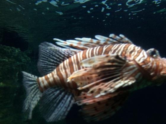 Rotfeuer - Fisch