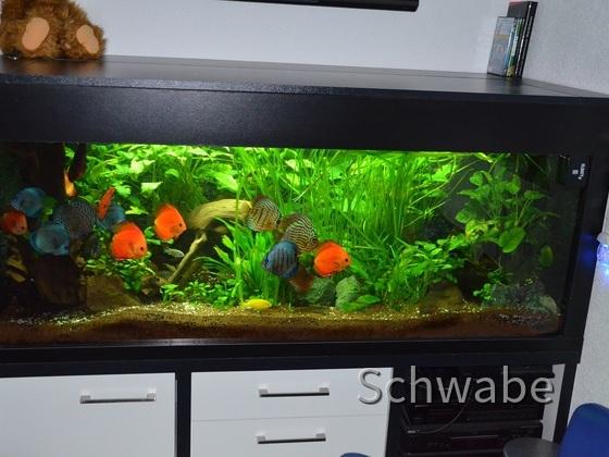 Aquarium Gesamtansicht