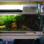 Eigenbau Brutbox für Fische