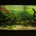 Von meiner Frau selbstgemaltes Aquarienhintergrund-Bild