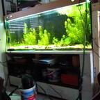 Aquarium 150x50x60 erste Bepflanzung